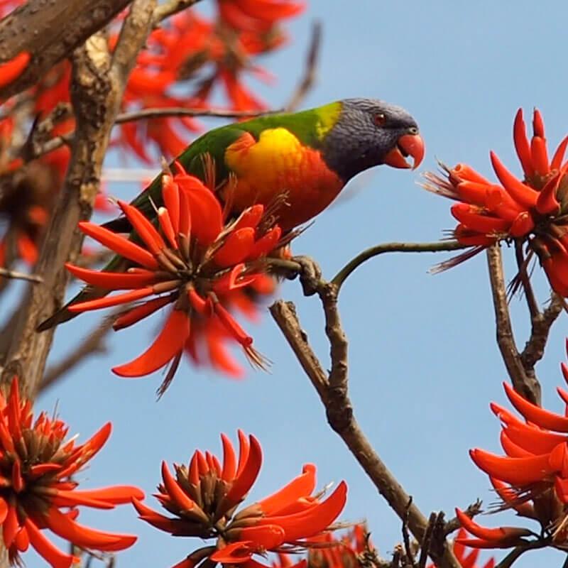 Red Energy - Parrot feeding
